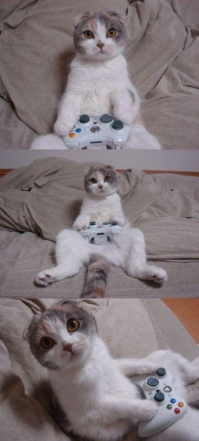 面白画像 ベッドの上でXbox360のゲームをやる猫が人間と変わらない(笑)animal_0057