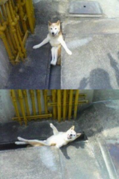 【犬おもしろ画像】溝にハマってるのに嬉しそうなおもしろい犬(笑)