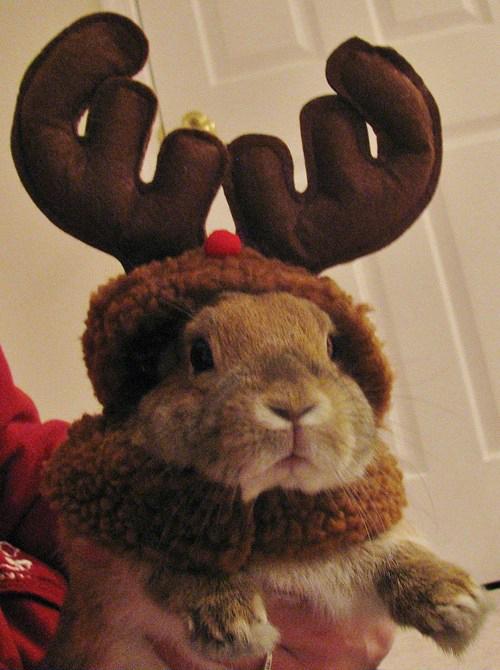 クリスマスおもしろ画像 トナカイのコスプレをしているウサギが抱きしめたくなるほどかわいい(笑)christmas_0022