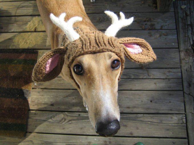クリスマスおもしろ画像 犬だって帽子を被ればトナカイに変身だワン(笑)christmas_0044