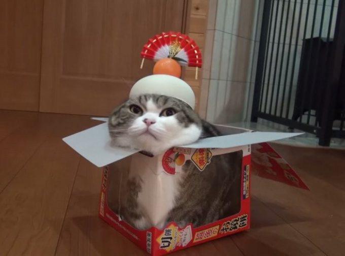 お正月おもしろ画像 落ち着くニャン! 自分のカラダよりも大きな鏡餅の箱に入って落ち着く猫(笑)newyear_0011