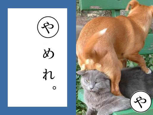 【猫とお正月おもしろ画像】おもしろかわいい! お正月早々『ねこかるた』でほっこりします(笑)newyear_0021_01