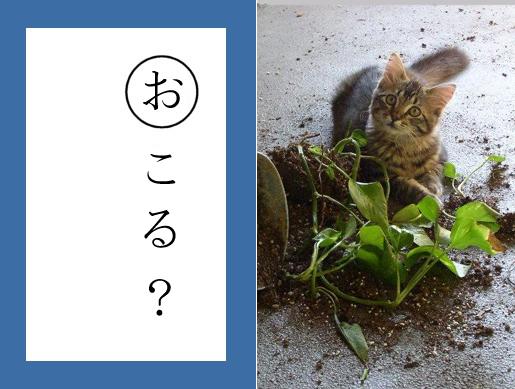 【猫とお正月おもしろ画像】おもしろかわいい! お正月早々『ねこかるた』でほっこりします(笑)newyear_0021_02
