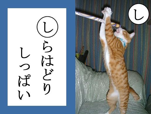 【猫とお正月おもしろ画像】おもしろかわいい! お正月早々『ねこかるた』でほっこりします(笑)newyear_0021_03
