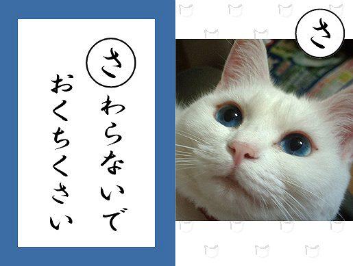 【猫とお正月おもしろ画像】おもしろかわいい! お正月早々『ねこかるた』でほっこりします(笑)newyear_0021_04