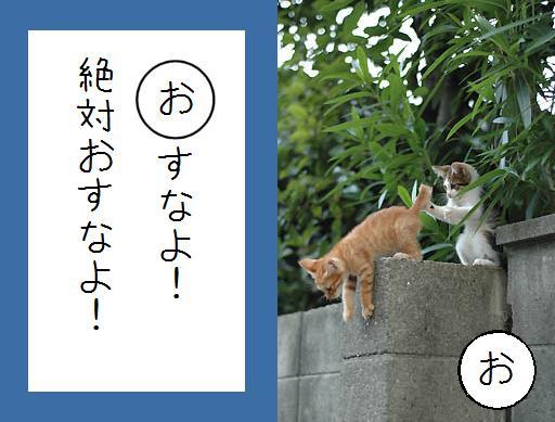 【猫とお正月おもしろ画像】おもしろかわいい! お正月早々『ねこかるた』でほっこりします(笑)newyear_0021_06