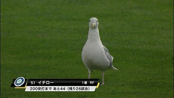【テレビの野球テロップおもしろ画像】ポッポー! 200安打まであと44のマリナーズイチロー選手がハトに生まれ変わる(笑)