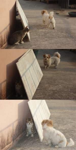 そ~っと! 犬を尾行していたら気付かれちゃったネコ(笑)animal_0069