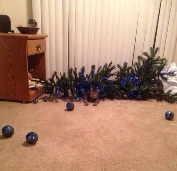 助けてー! クリスマスツリーで遊んでいたら、ツリーが倒れてきて助けを求めるネコ(笑)animal_0072