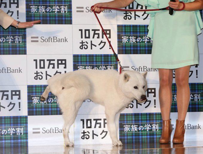 【犬おもしろ画像】シャー! ソフトバンクのお父さん犬、記者会見でやらかす(笑)animal_0073