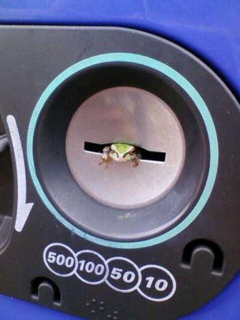 千を出せ! 自動販売機の投入口から顔を出すカエル(笑)animal_0078