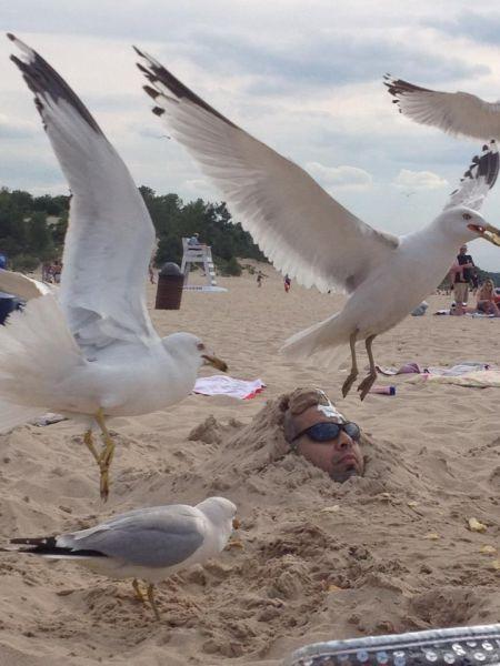【海の砂浜おもしろ画像】助けて! 砂埋めされて身動き取れないのをいいことに、カモメにイタズラされる人(笑)