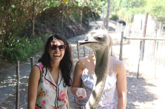 カシャ! 写真を撮る絶好のタイミングでフレームに入ってくるダチョウ(笑)animal_0081