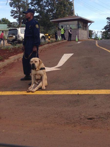 【犬おもしろ画像】疲れたワン! 警察犬、疲れすぎて道に座り込む(笑)animal_0087