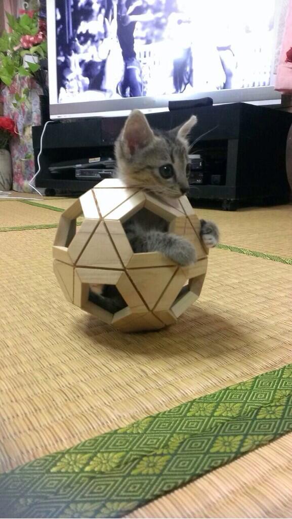 【猫おもしろ画像】子どもの木のおもちゃの中に入る子猫が面白かわいい(笑)