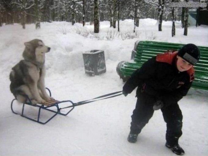 逆だよ逆! 主従関係が逆になっているソリ犬と子ども(笑)foreign_0087