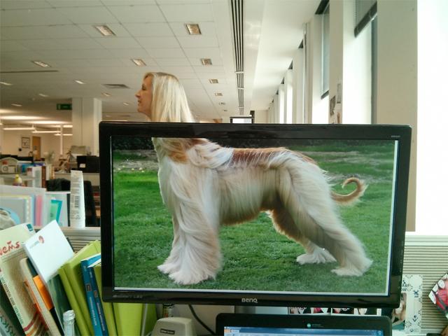職場に珍獣? 社内で見かけた犬のカラダをした女性(笑)foreign_0091