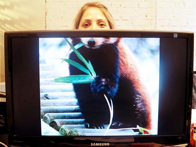 desk safari職場に珍獣? 社内で見かけた犬のカラダをした女性(笑)foreign_0091_04