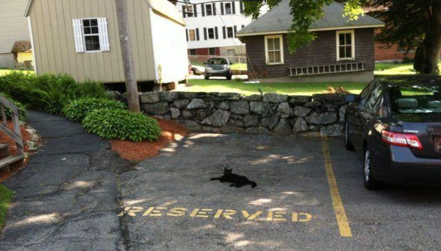 【猫おもしろ画像】我が物顔で専用駐車場でくつろぐ借主(笑)foreign_0095