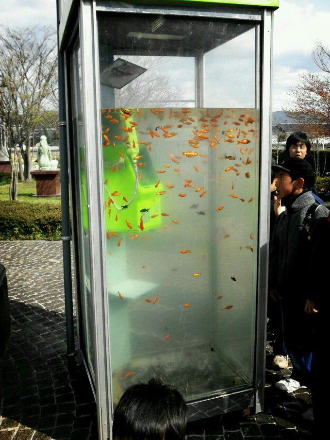 水槽? 福島県「梁川美術館」にあった公衆電話ボックスが金魚の水槽で話題に(笑)syame_0059