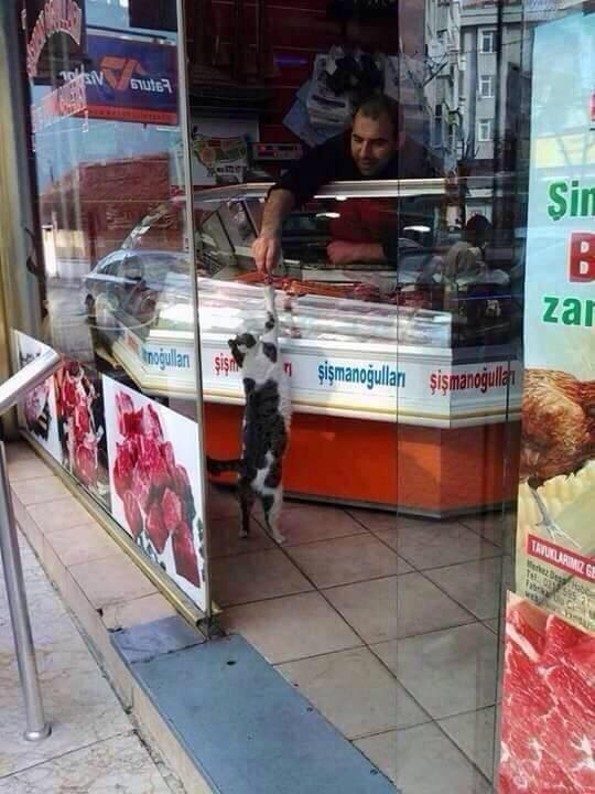 ください! お肉屋さんからおすそ分けをもらう猫(笑)cat_0001