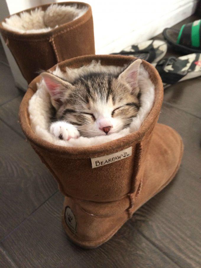 暖かい! もこもこブーツの中で気持ちよさそうに眠るネコが可愛すぎ(笑)cat_0002