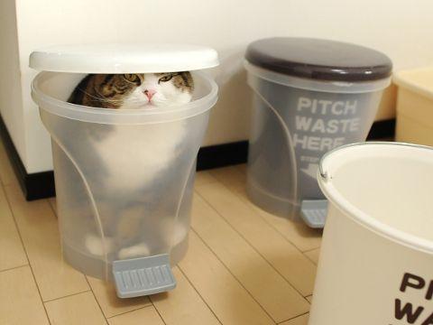 落ち着くの? 自分からゴミ箱の中に入っておいて、ムスッとした顔をする猫(笑)cat_0003