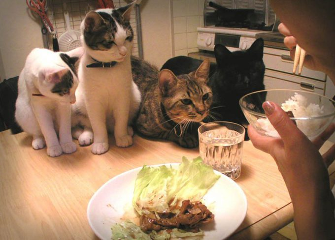 くれないかなぁ! ご飯を食べてる時のネコたちの無言の圧力がすごい(笑)