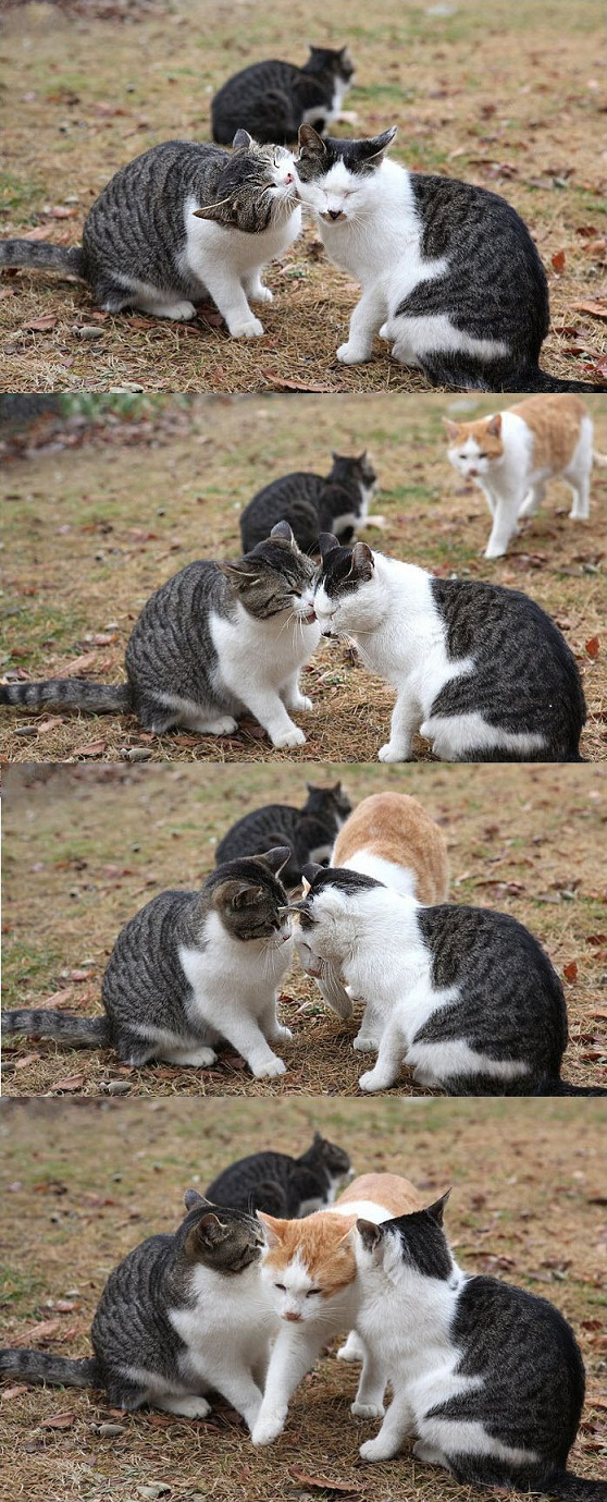 嫉妬! 「すいません、ちょっと通りますよ…」(笑)cat_0010