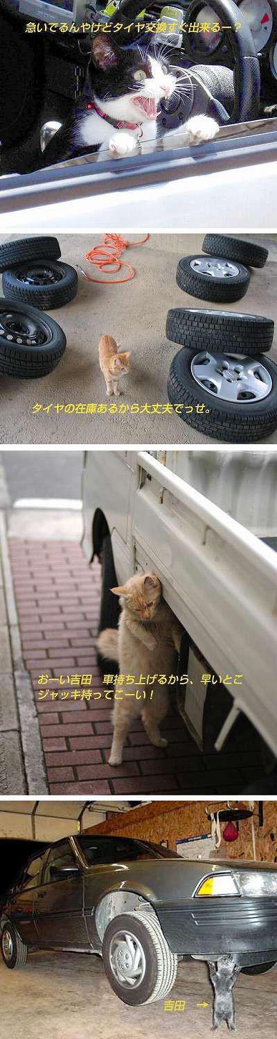【猫おもしろ画像】猫おもしろ4コマ 「吉田ぁー!スパナ持ってこーい!」(笑)
