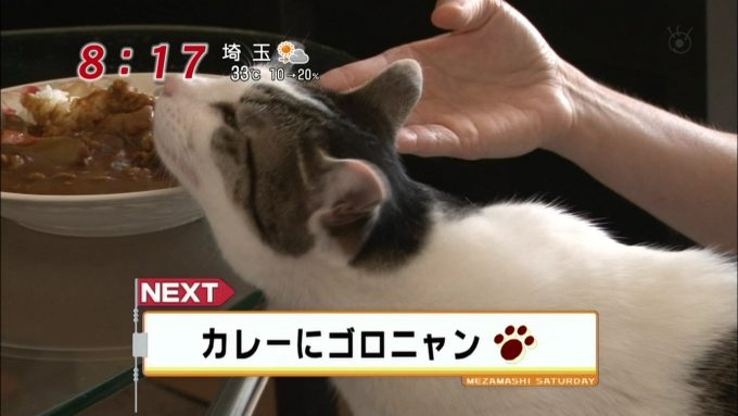 カレーにゴロニャン猫
