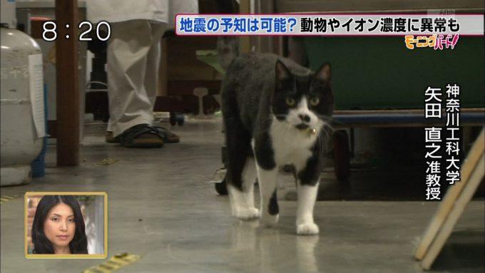 賢い猫! 『モーニングバード』に出演の神奈川工科大学の猫准教授がりりしい(笑)