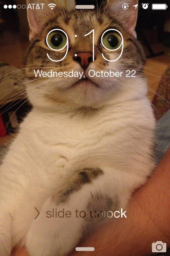ピッタリ! iPhoneの待ち受けにしたネコ画像と時計が奇跡のマッチ(笑)cat_0015