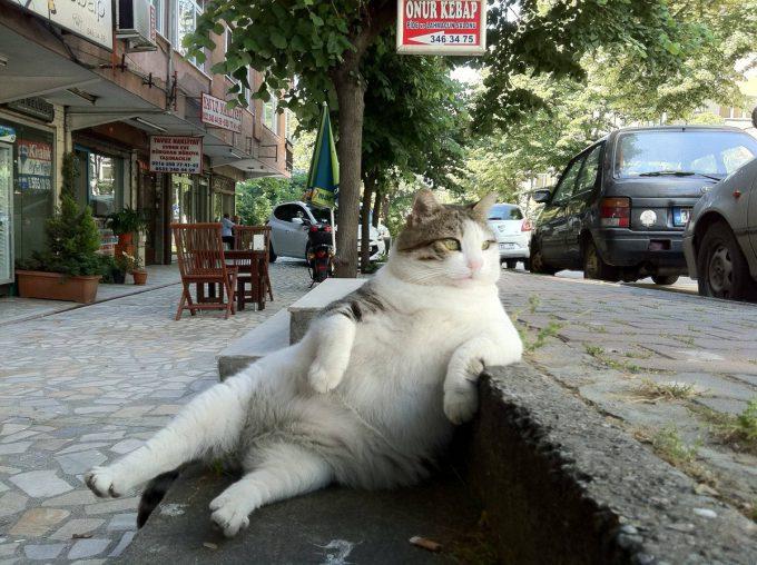 【猫おもしろ画像】街の席段に腰掛けるダンディーな猫がおもしろい(笑)