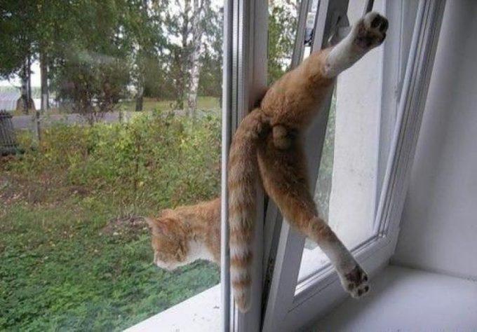 【猫おもしろ画像】窓のすごい所から外に出ようとする猫のおもしろい体勢(笑)