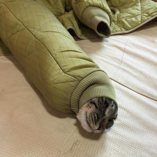【猫おもしろ画像】ブルゾンの袖から顔を出すネコが可愛すぎ(笑)cat_0023