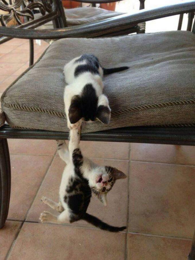 助けてー! イスから落ちそうな子猫を必死に助けようとする姿にキュン(笑)