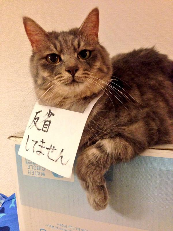 こらっ! 砂糖瓶を割ったのに反省の色が見えないネコに謝罪文の首飾り(笑)cat_0026_02