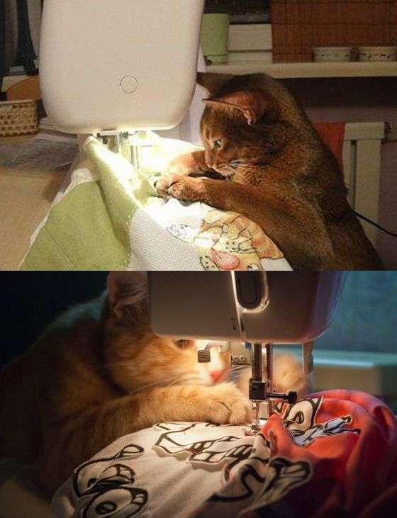 【猫おもしろ画像】苦労猫! 夜な夜なミシンで裁縫を行う猫たちがかわいい(笑)