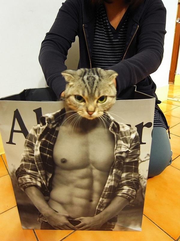 ムキムキ! 猫が『アバクロンビー&フィッチ』の袋に入るとマッチョに変身(笑)cat_0030
