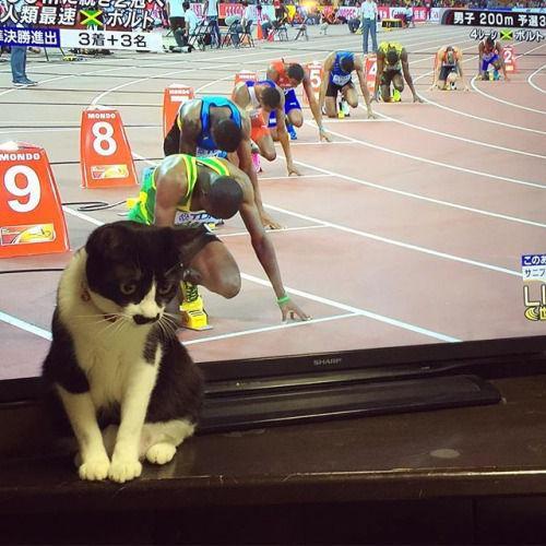 これは勝てない! 人類最速の男ボルトvs10レーン目の猫選手(笑)