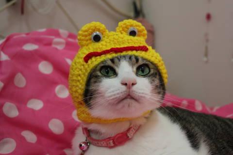 カエルの被り物をした猫がヤバいくらいにかわいい(笑)