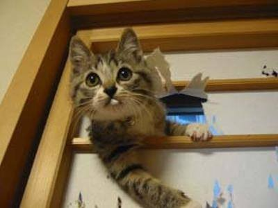 【猫おもしろ画像】「話は聞かせてもらった!」と言わんばかりのおもしろい猫(笑)