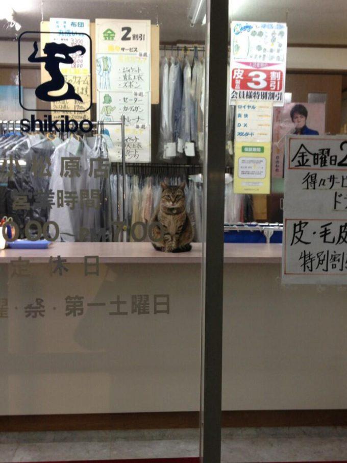 置物と思ったら! クリーニング屋さんでこちらをじっと見つめるネコ(笑)cat_0039