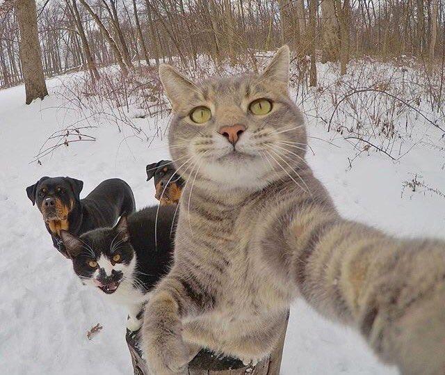 賢すぎる! カメラを使って自撮りする猫(笑)cat_0045