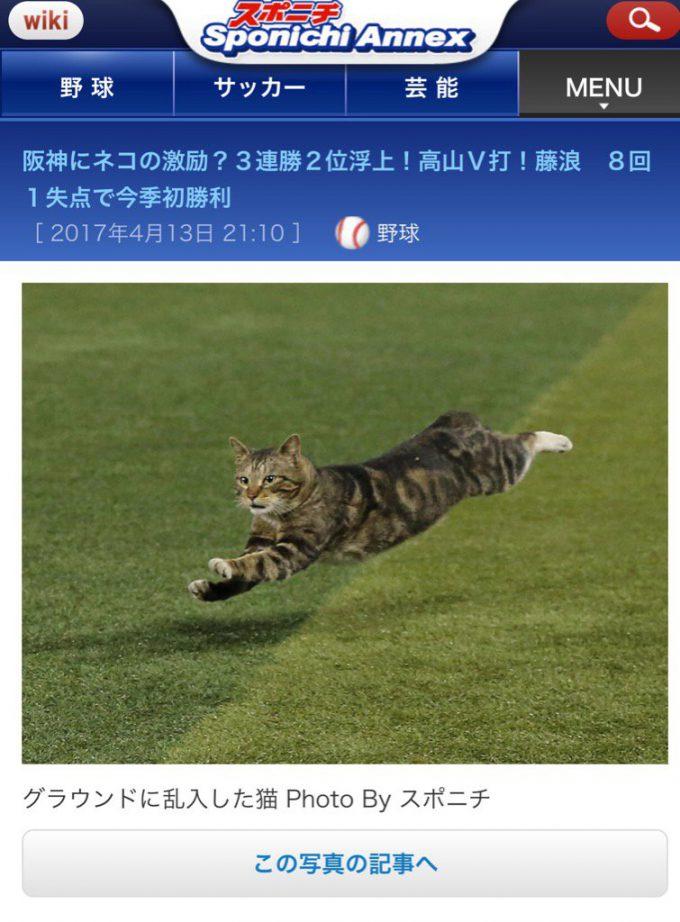 幸運の猫? 阪神対DeNA戦に猫が乱入したおかげで阪神勝利(笑)
