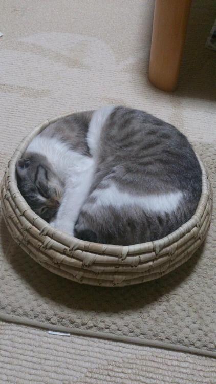アート! 収納バスケットにすっぽり収まっている猫の姿がなんか芸術的(笑)