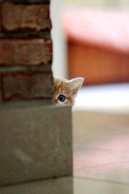 そーっと! 柱の横からこっそりこちらを覗く子猫がかわいすぎる(笑)cat_0048