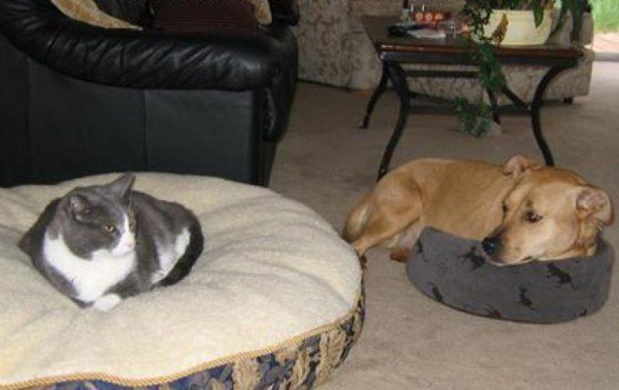 クゥーン! 猫に寝床を奪われた犬と、犬の視線を無視する猫ちゃん(笑)