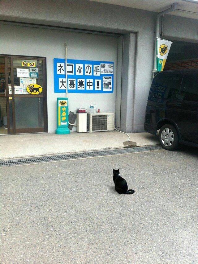 【猫おもしろ画像】こんにちはー!「ネコの手大募集中!」の求人広告を見てクロネコヤマトに来た猫(笑)